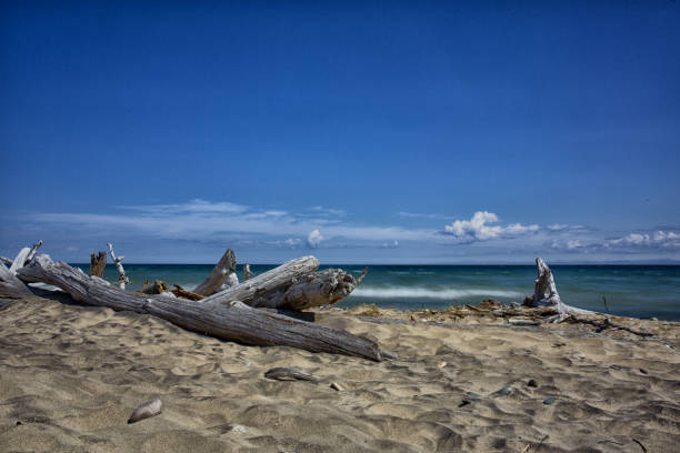 Lake Superior Shoreline with Driftwood stock photo