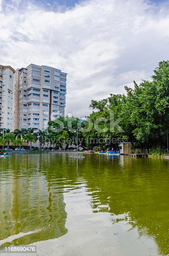 lake surrounded by natural and tropical landscapes of a park with an arch bridge cruising the lake with beautiful green tones and reflection in the water and city buildings in the background