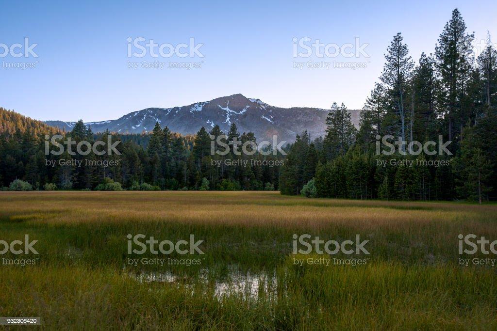 Lake Tahoe Meadow stock photo
