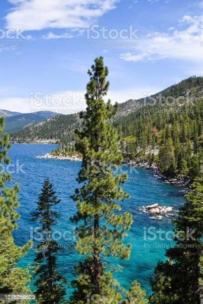 Photo of Lake Tahoe tree tops