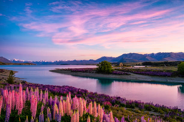 lake tekapo at dawn, new zealand south island - landscape scenery stock pictures, royalty-free photos & images