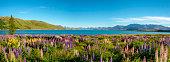Panoramic of Lake Tekapo, on New Zealand's South Island.