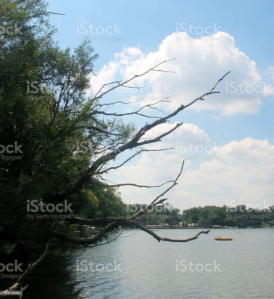 lake tree royalty-free stock photo