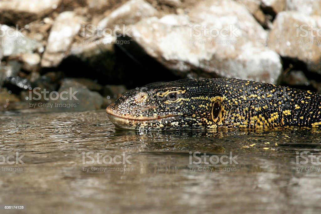 Lake Victoria - The Source of The River Nile - Uganda stock photo