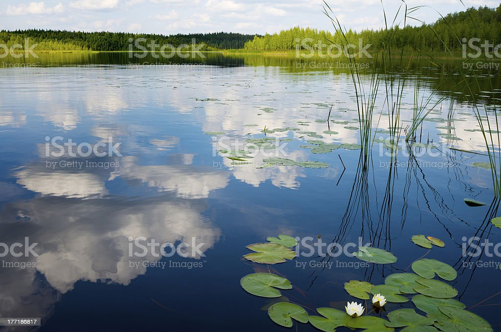 Lake view in Scandinavia, with Water Lilies stock photo