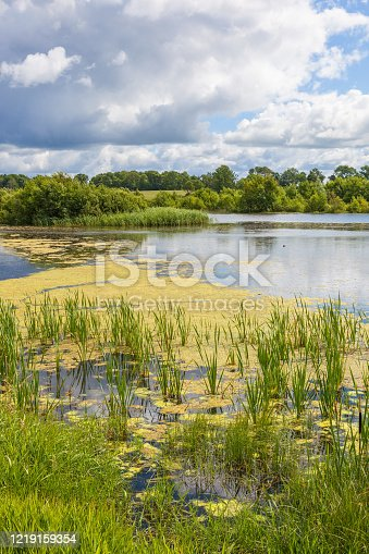 Lake with algae in the water and the beach
