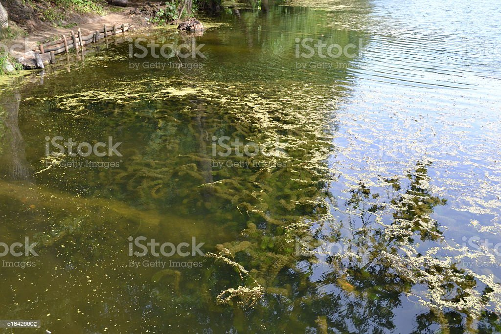 Lake with clear water and algae on the bottom. stock photo