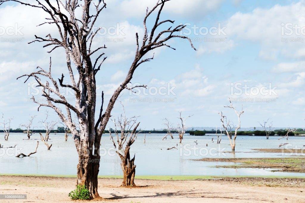Lac avec des arbres morts dans le Selous Game Reserve, Tanzanie - Photo