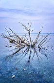 Lake with frozen tree and blue background. Winter on Lake Schwerin in Mecklenburg-Vorpommern.