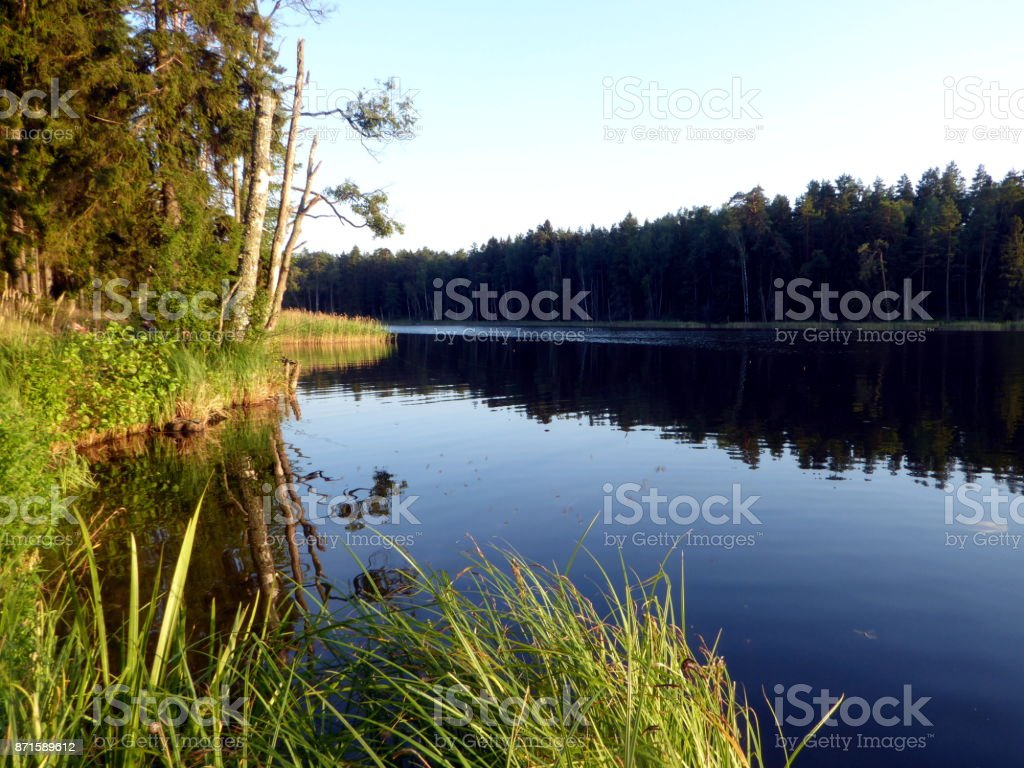 Lake with golden grass and forste around in summer in Poland stock photo