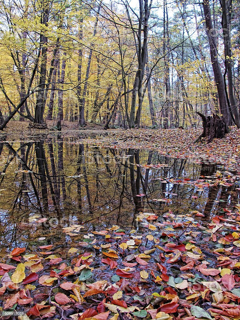 lake with reflection of beech tree stock photo