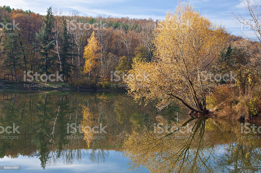Lake with tree reflections stock photo