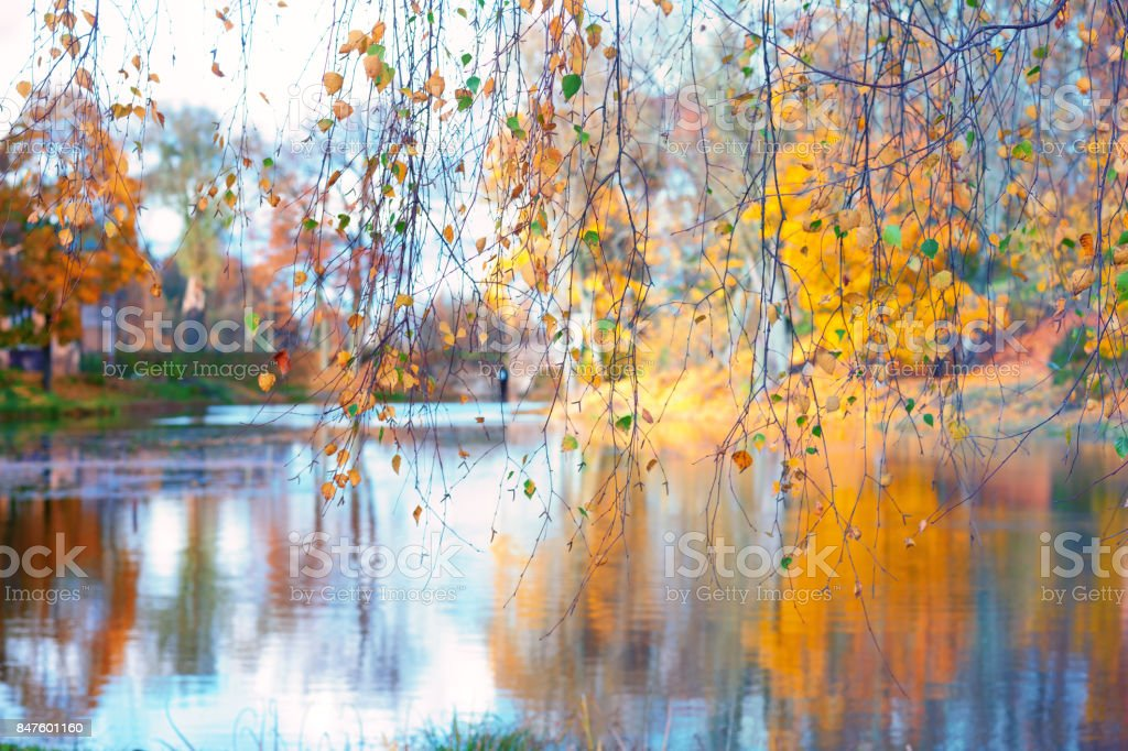 Lakes through birch branches stock photo