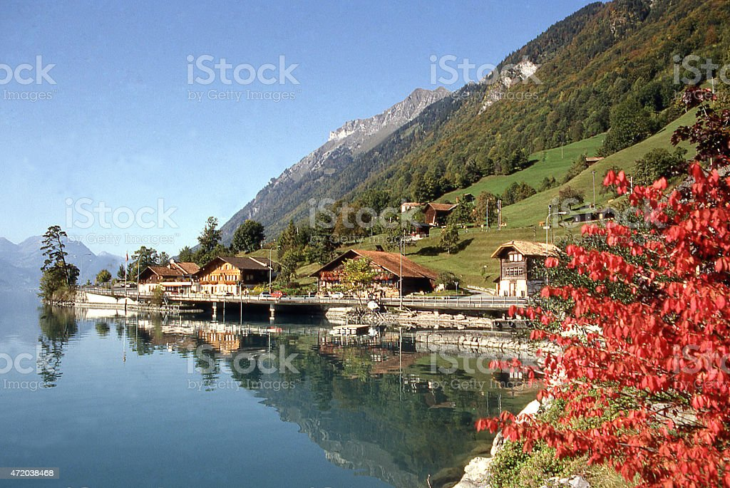 Lakeshore and fall colors Thunersee Interlaken region Switzerland stock photo