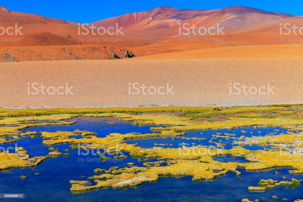 Lakeshore pond and marsh in Atacama Desert Volcanic landscape –  Chile stock photo