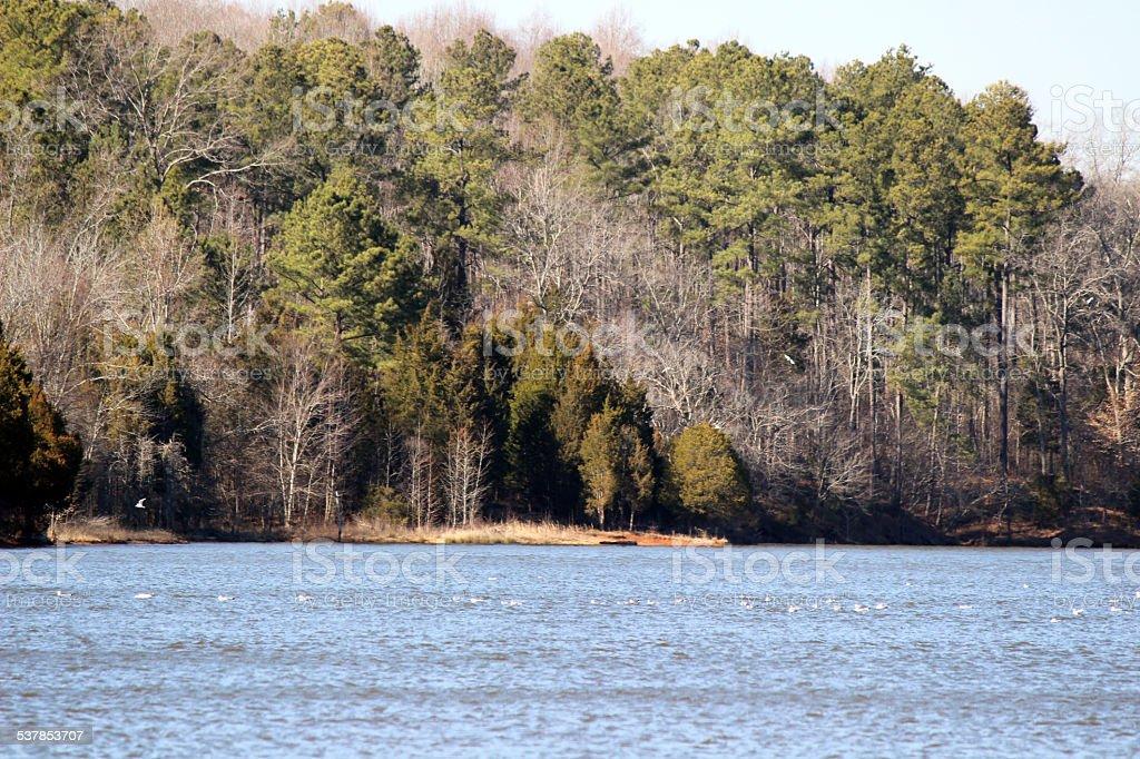 Lakeshore Scene with Seagulls stock photo