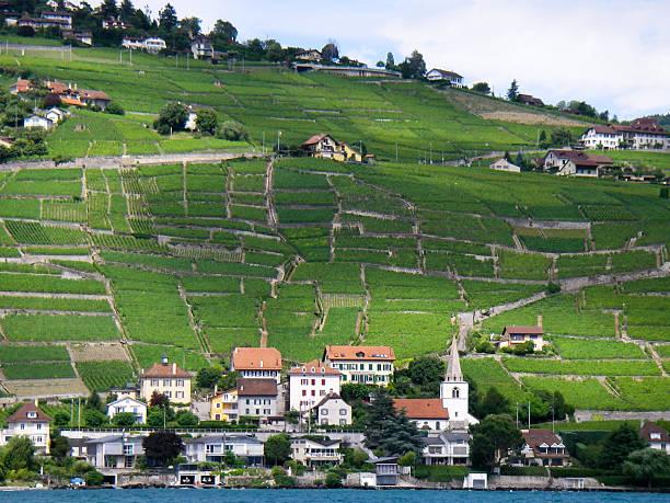 lakeshore weinberge und schweizer dörfer nahe montreux zwitzerland - robert weinberg stock-fotos und bilder