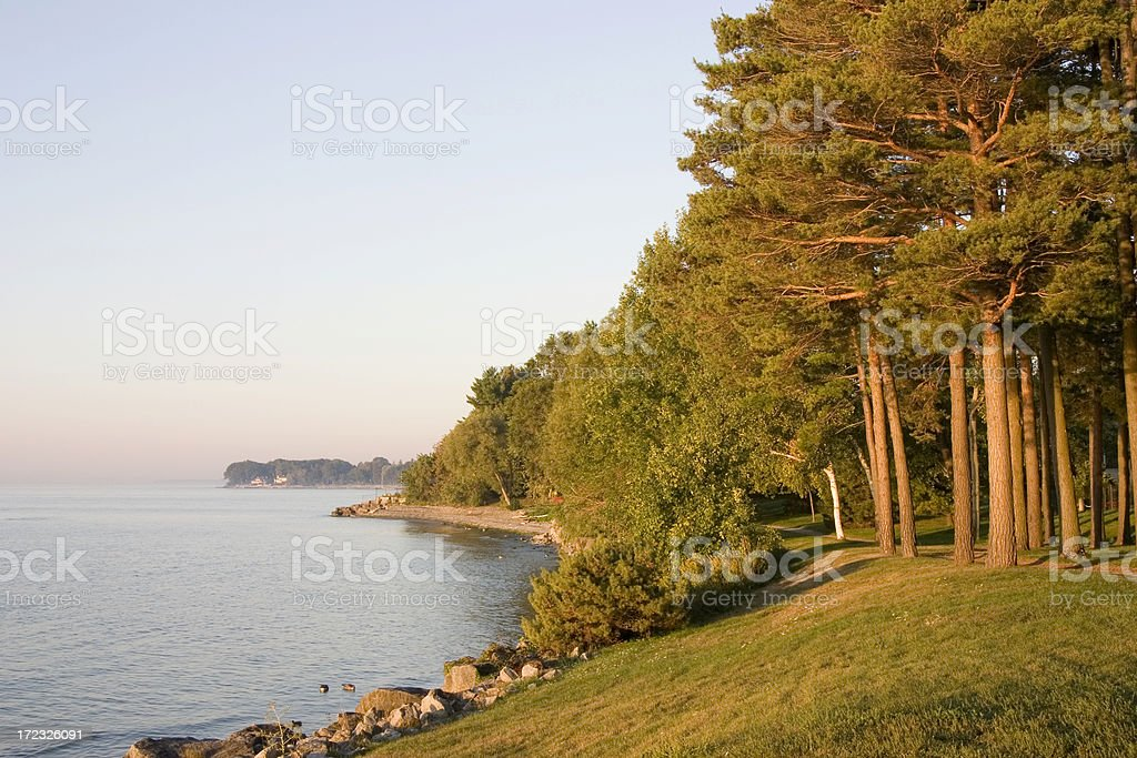 Lakeshore with a grove stock photo