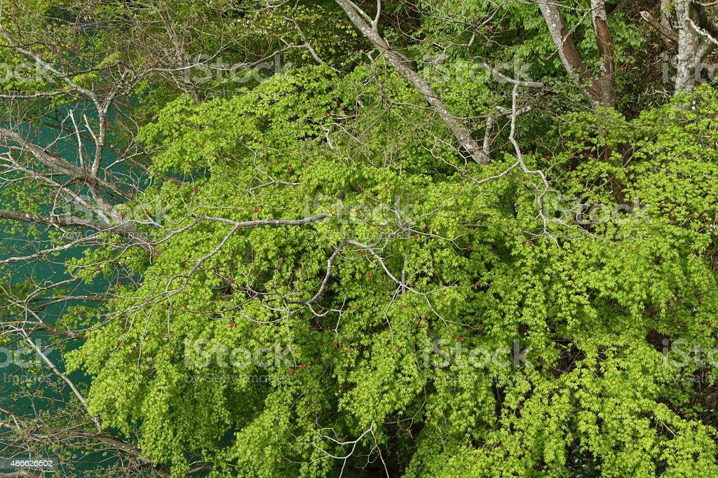 湖畔の新鮮なグリーン ロイヤリティフリーストックフォト