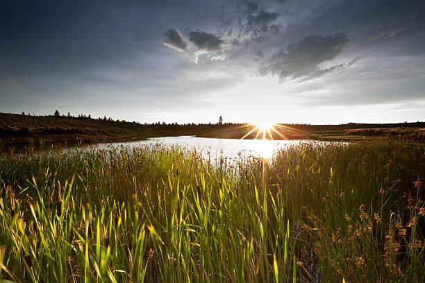 zachód słońca nad jeziorem siedliska - mokradło zdjęcia i obrazy z banku zdjęć