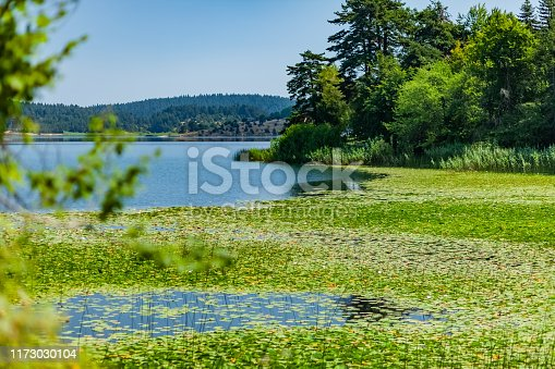 landscape; green plant leaves above water on lake edge