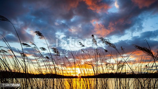 The sun sets on a lake in the Surrey Hills, silhouetting reeds growing at the water's edge.