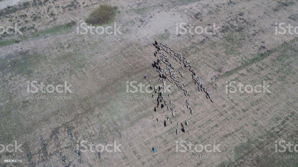 Lamb Family aerial wiew foto de stock royalty-free