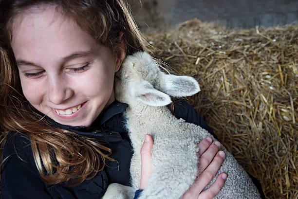 Museau d'agneau au cou de la jeune fille. - Photo