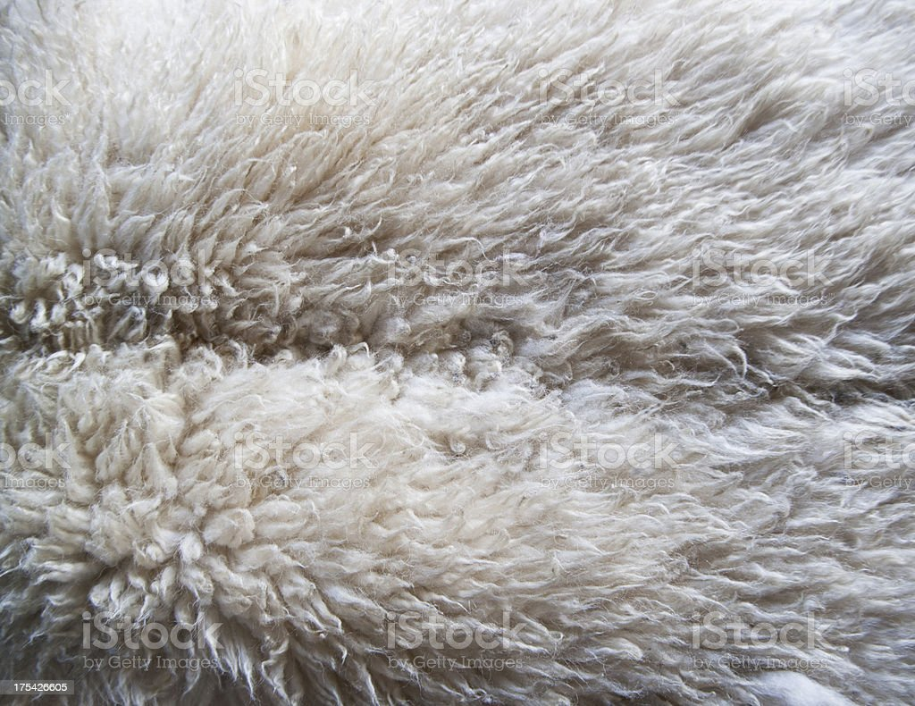 Lamb Texture stock photo