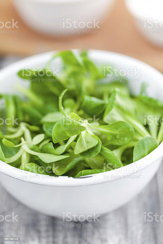 Lamb's lettuce stock photo
