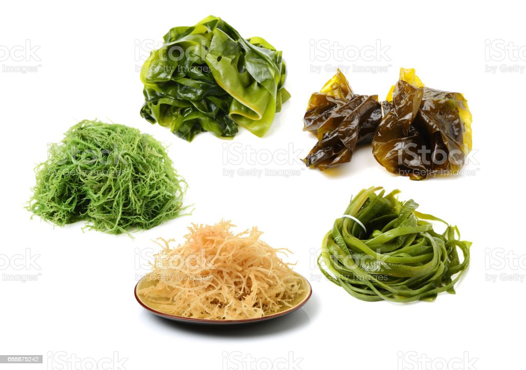Laminaria (Kelp) Seaweed Isolated on White Background stock photo