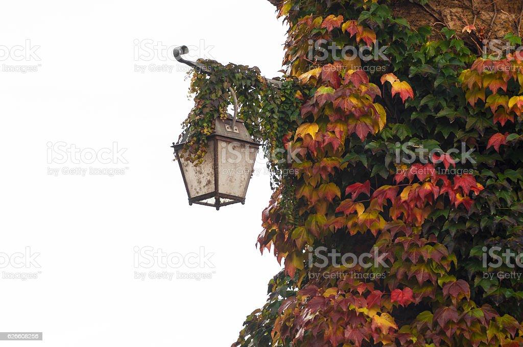 lamp and vine stock photo