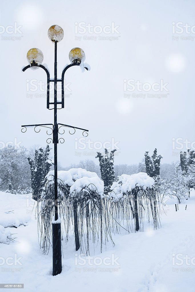 lamp beside weeping willow royalty-free stock photo