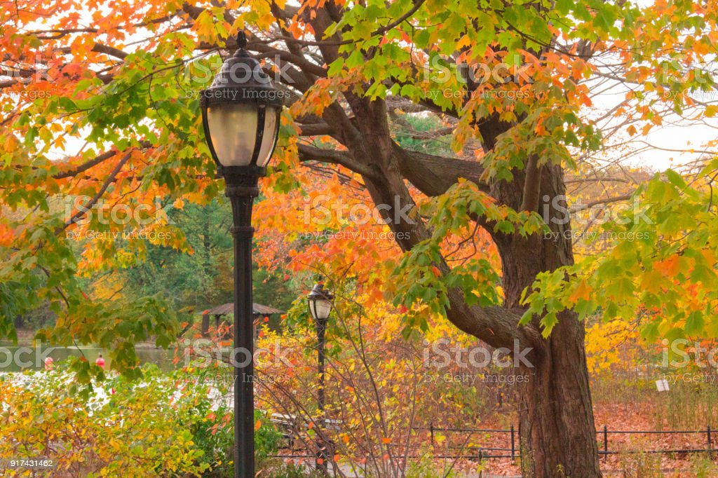Lamp in a colorful Forest stock photo