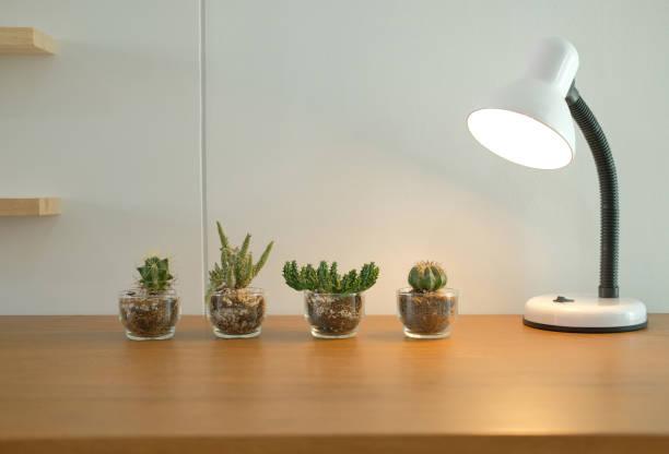 Lampe, Sukkulente Kaktus Pflanze im Topf auf hölzernen Schreibtisch in der Nähe von weißen Wand Dekoration – Foto