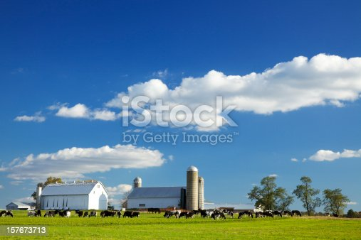 Cows grazing on farm in Lancaster County, Pennsylvania.