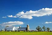 Cows grazing on farm in Lancaster County, Pennsylvania.