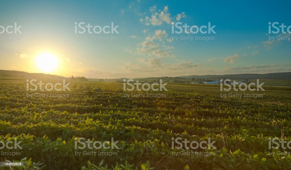 Lancaster County Sunrise over Field with Farm in the Distance stock photo