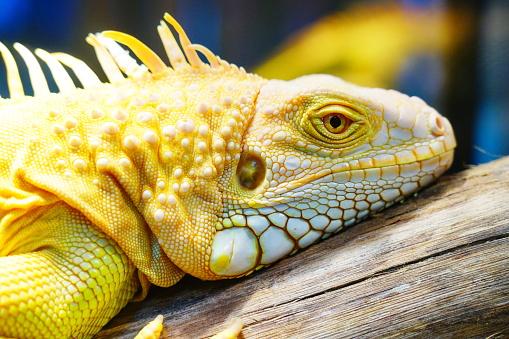 Germany, Thailand, Iguana, Reptile, Zoo