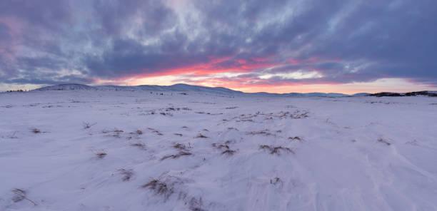 希望の土地。ヤマル半島の北極 tunda の場所。冬の風景。 - ツンドラ ストックフォトと画像