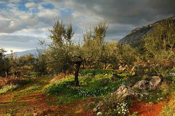 terra de messinia - jardim do eden - fotografias e filmes do acervo