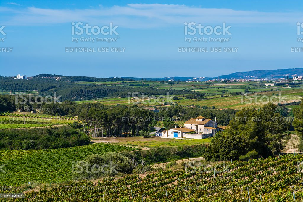 Land of vineyards stock photo