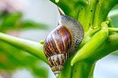 Land Snail on Tree