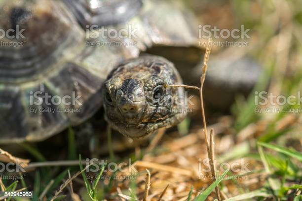 Land tortoise picture id843945980?b=1&k=6&m=843945980&s=612x612&h=n27qa7 gbbj3uiprokrbsopekvrssh aeltdjcpsyuu=