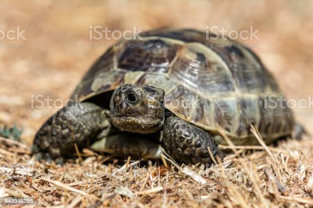 Land tortoise picture id843946298?b=1&k=6&m=843946298&s=612x612&h=mxydzpjqvbpvc pn4clfrkwffsa7jem2ixzdkb7ena8=