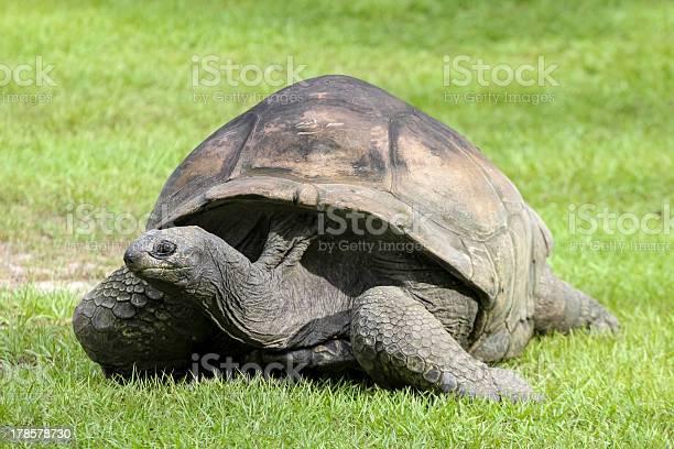 Land turtle picture id178578730?b=1&k=6&m=178578730&s=612x612&h=edlxrol6 wwzn3hulmzyguzscavhgqbsgu6hochuq2m=