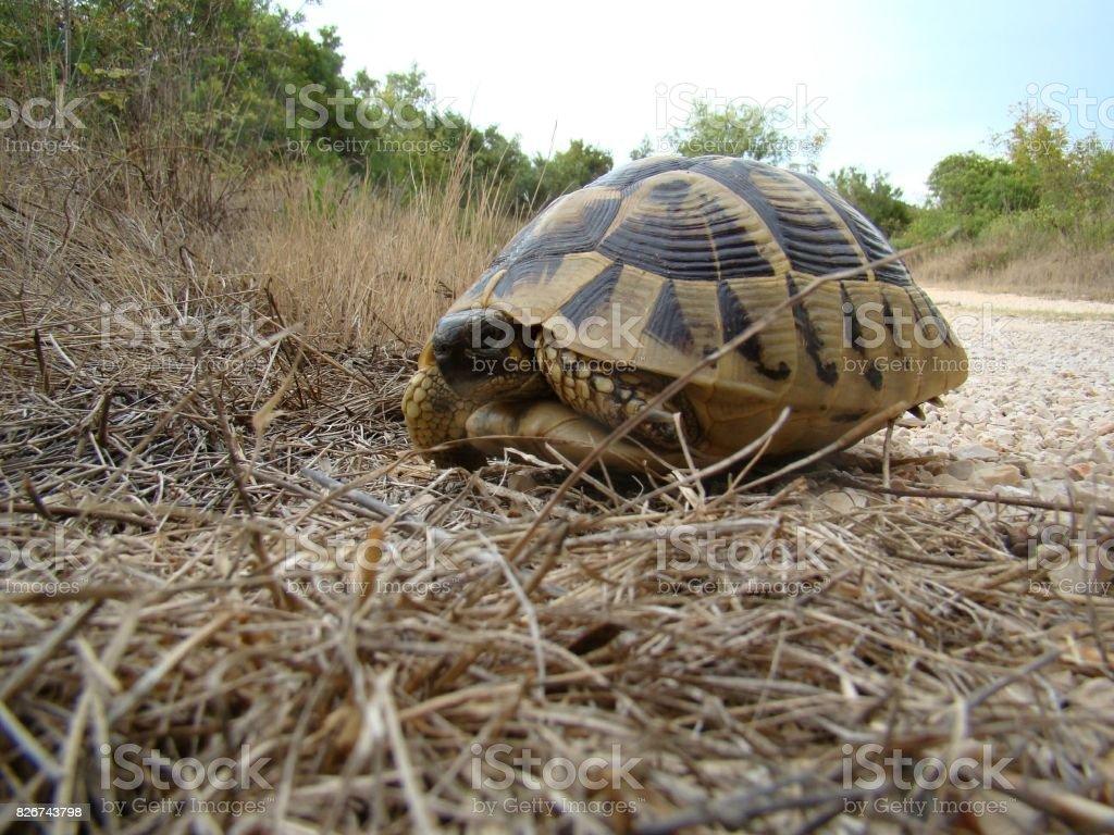 Land Turtle stock photo
