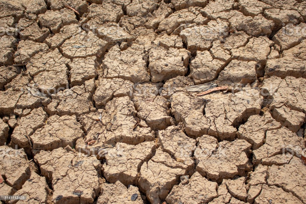 Land with dry and cracked ground