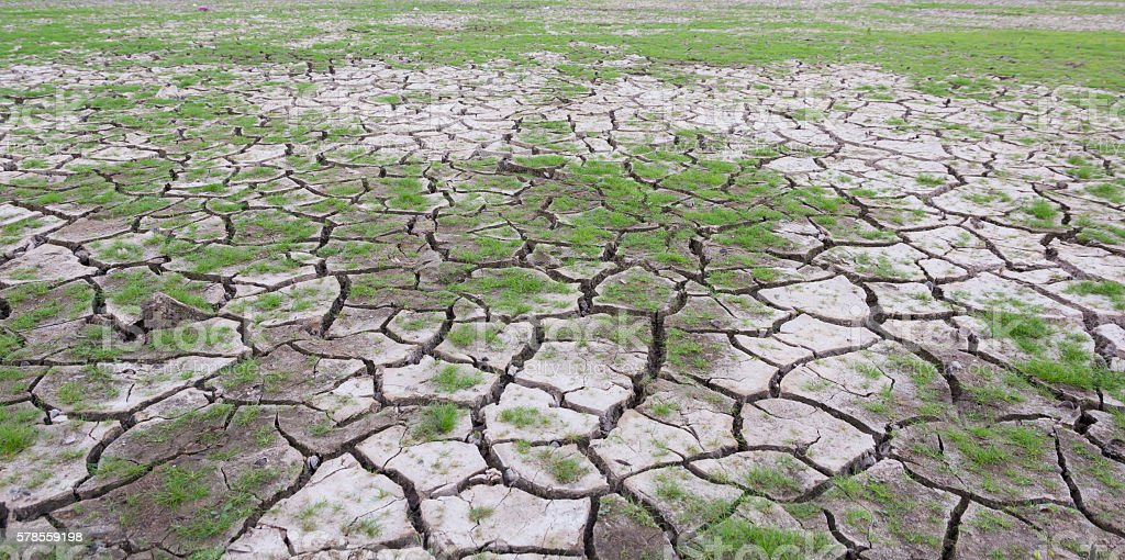 land with dry cracked mud ground texture with new plant