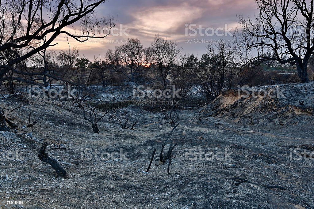 Tierra con árboles después de fuego - foto de stock